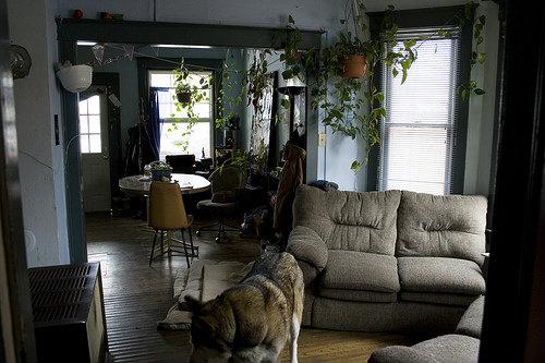 犬と暮らすジブリ